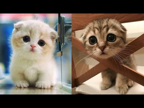 Baby Cats – Cute and Funny Cat Videos Compilation #8 | Aww Animals