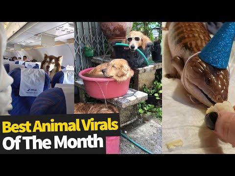 Top Viral Animal Videos – July 2019